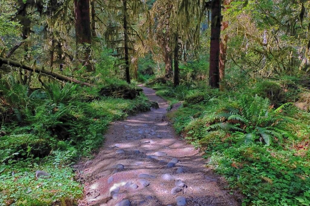 Upper Hoh River Trail / © David Lee / Flickr