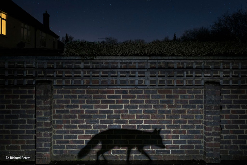 Shadow walker by Richard Peters / Photographer of the Year 2015.