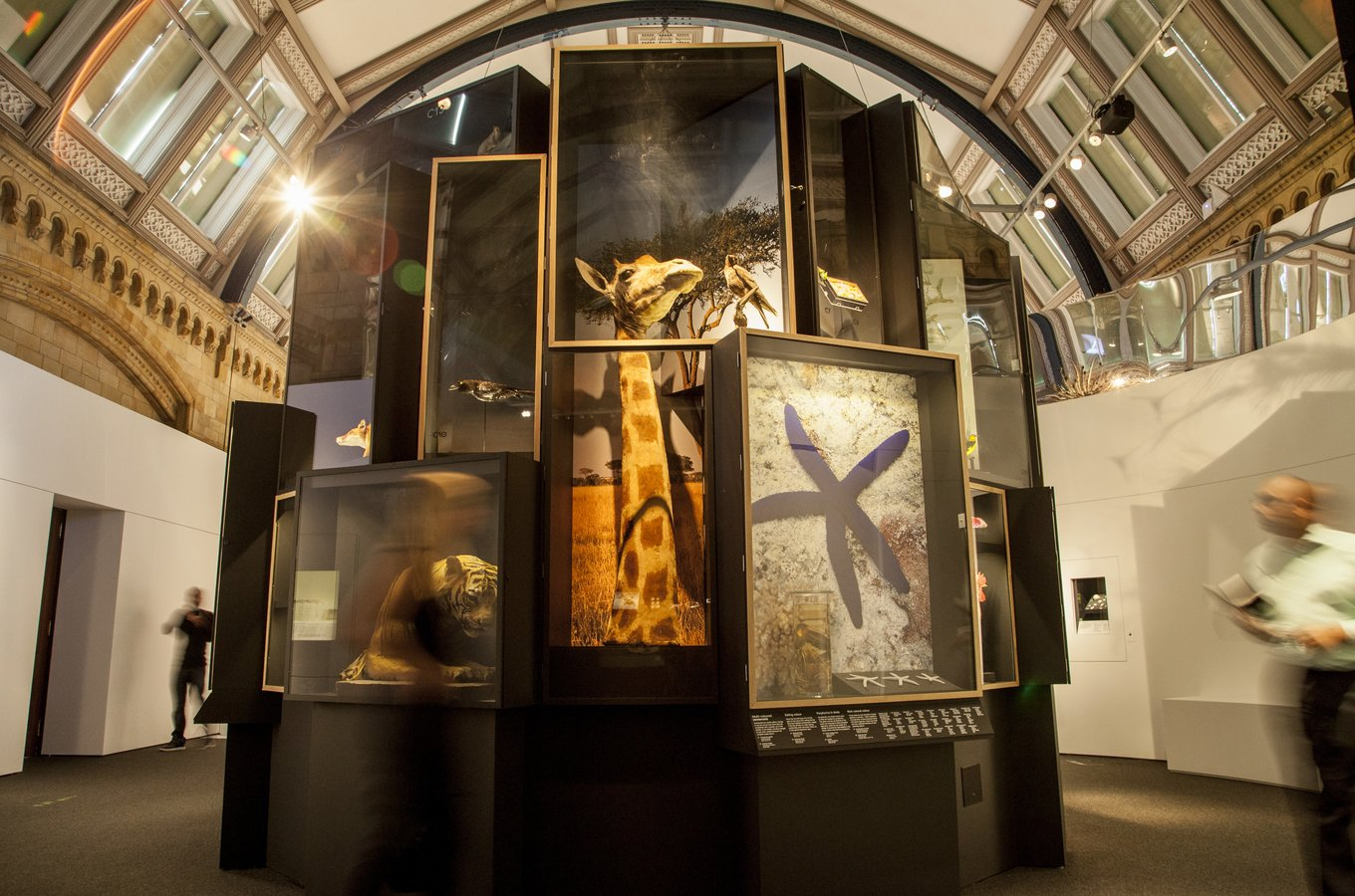A specimen tower in the exhibition, Colour and Vision|©Trustees of Natural History Museum, London/NHM