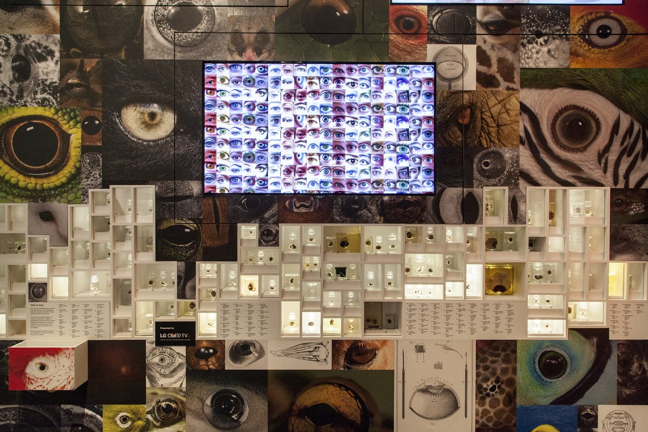 Wall of Eyes with LG televisions|©The Trustees of the Natural History Museum, London/NHM