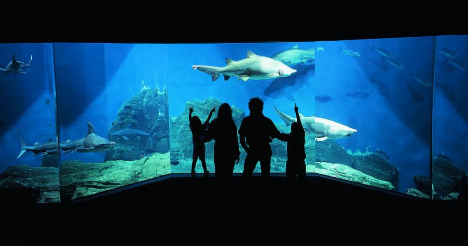 Shark Tank at The Maritime Aquarium | Courtesy of the Maritime Aquarium/Flickr