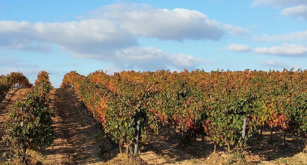 Vineyard in La Rioja | CC0 Pixabay