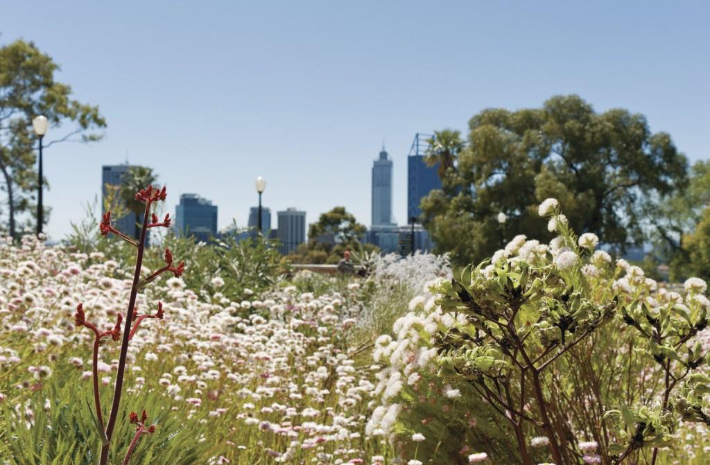 Kings Park, Perth, WA | Courtesy of Botanic Gardens & Parks Authority © Jody D'Arcy
