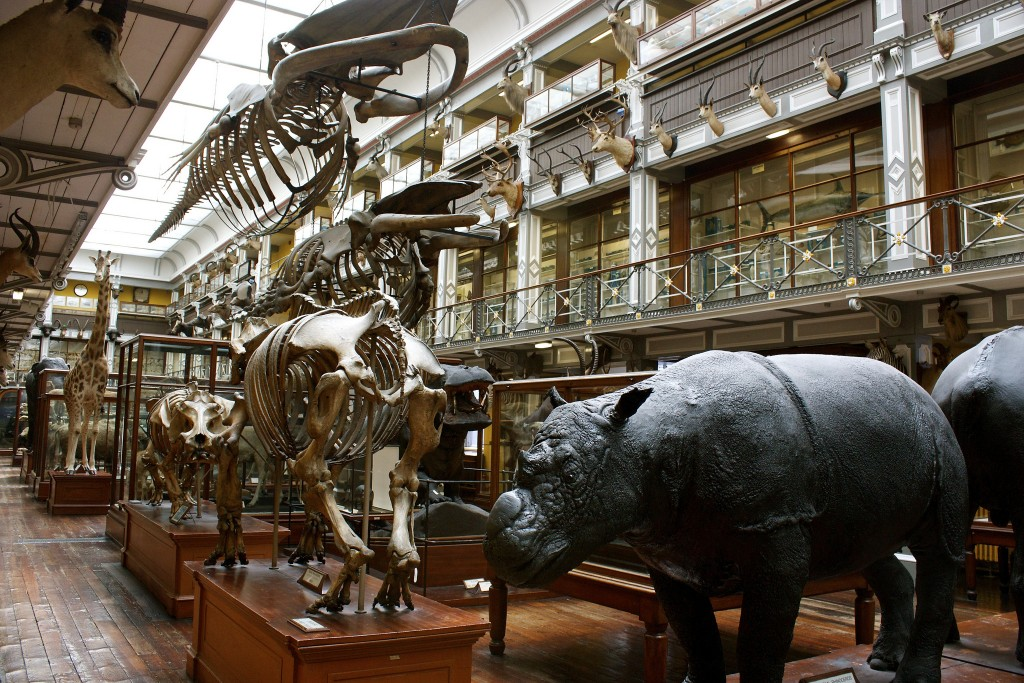 Natural History Museum, Dublin | © Neil Turner/Flickr