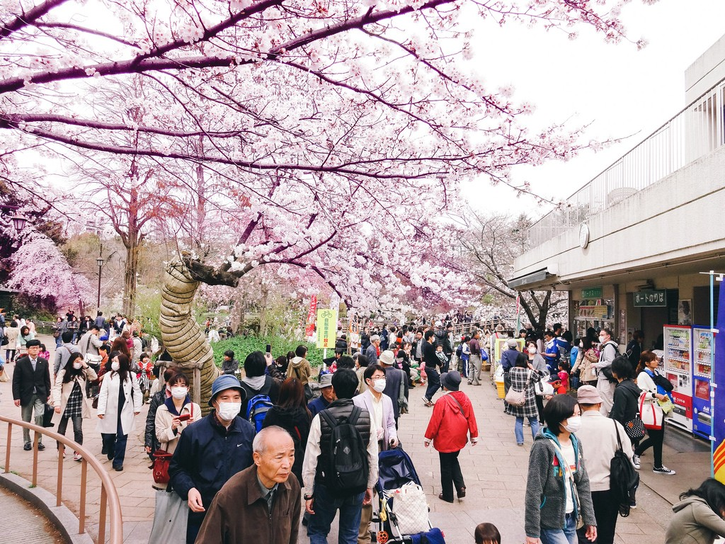Cherry blossom viewing (hanami) at Inokashira Park in Kichijoji | © Dick Thomas/Flickr