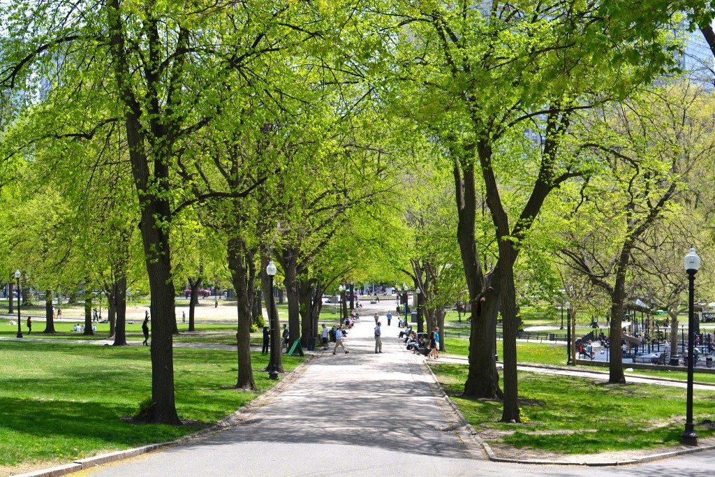 Spring in Boston Common|©Vignesh Ananth/Flickr