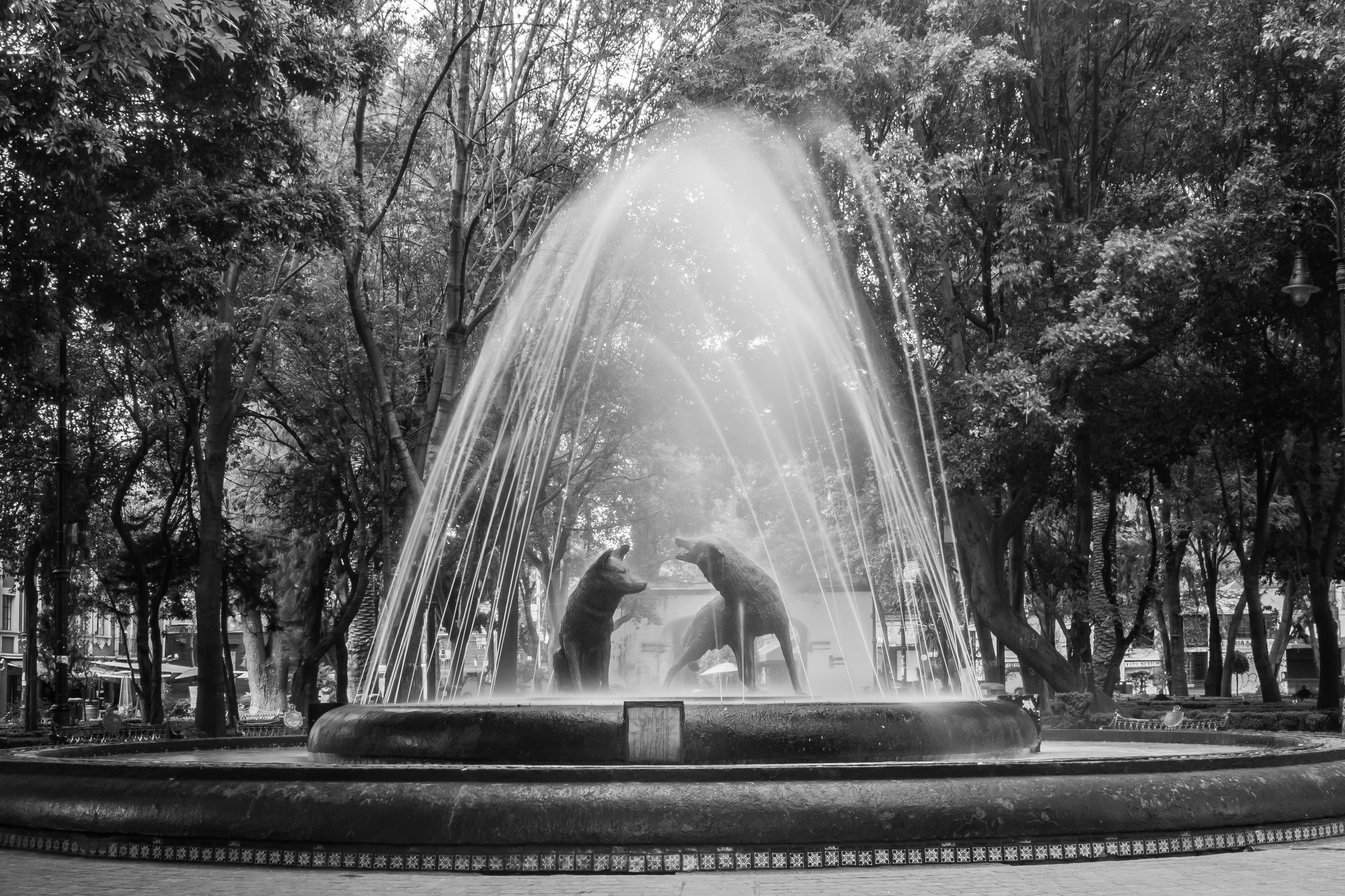 Fuente de Los Coyotes, Jardín Centenario, Coyoacán | © Javier Castañón/Flickr