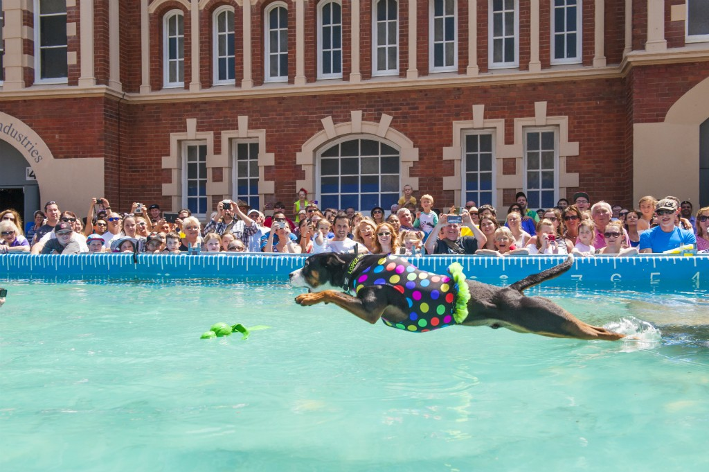 Diving Dogs as part of the free entertainment 2016 | Courtesy of Royal Agriculture Society of WA