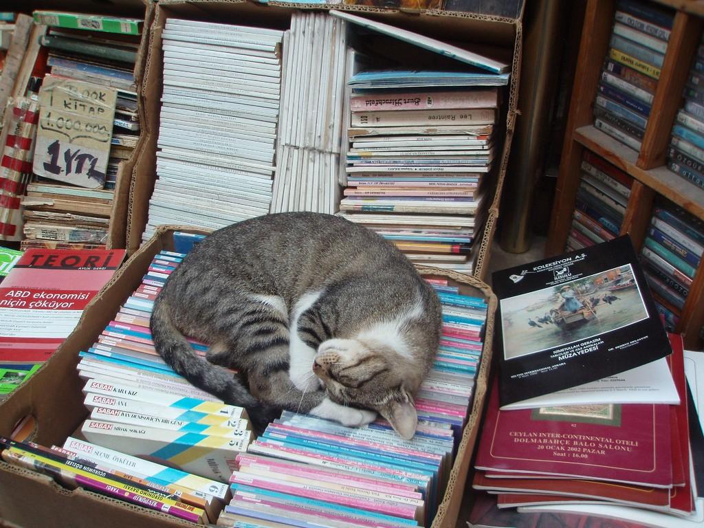 The bookseller's cat | © Monika/Flickr