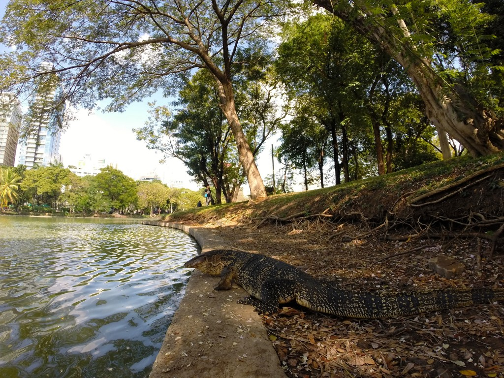 Lumpini Park/Courtesy of Kelly Iverson