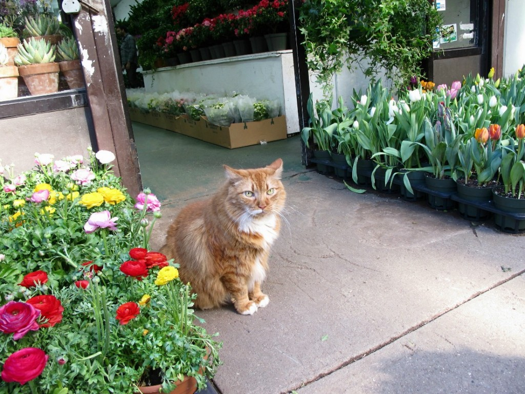 Cat : Chelsea Flower District | © Kristine Paulus/Flickr