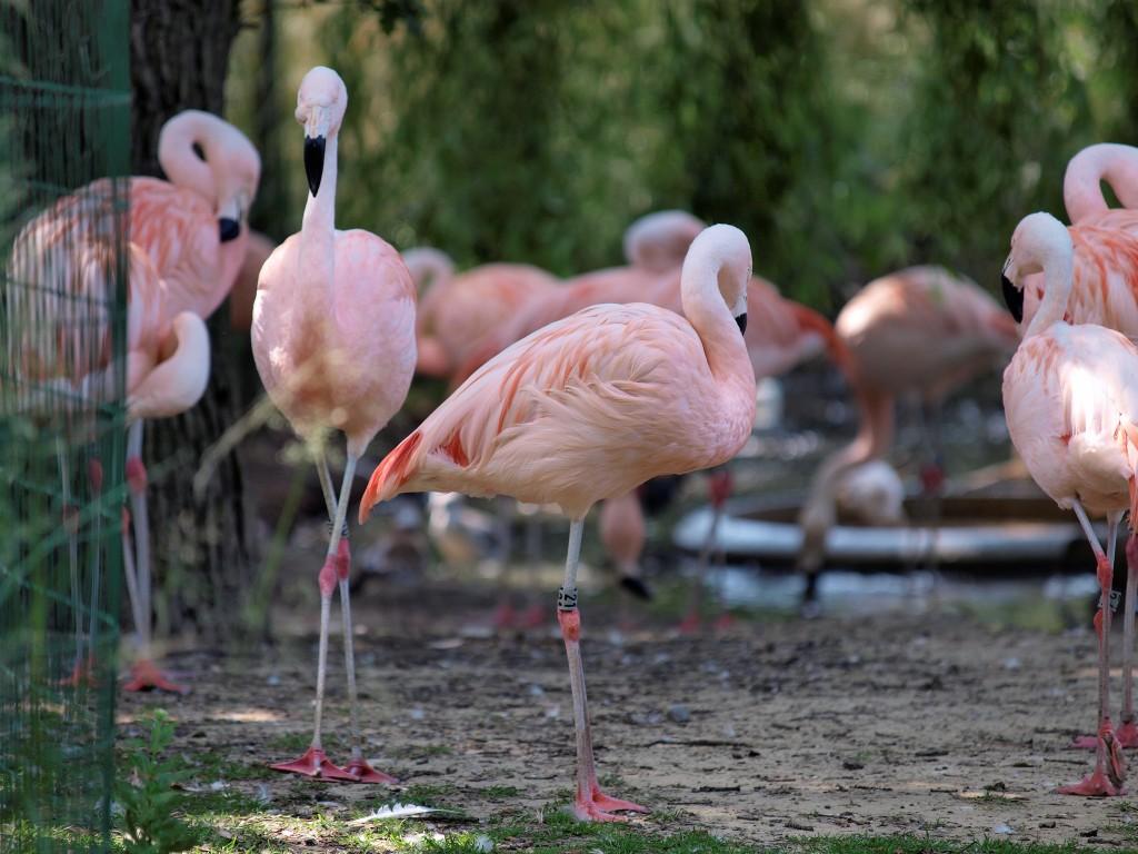 Flamingoes near Plantage | © Eric de Redelijkheid / Flickr
