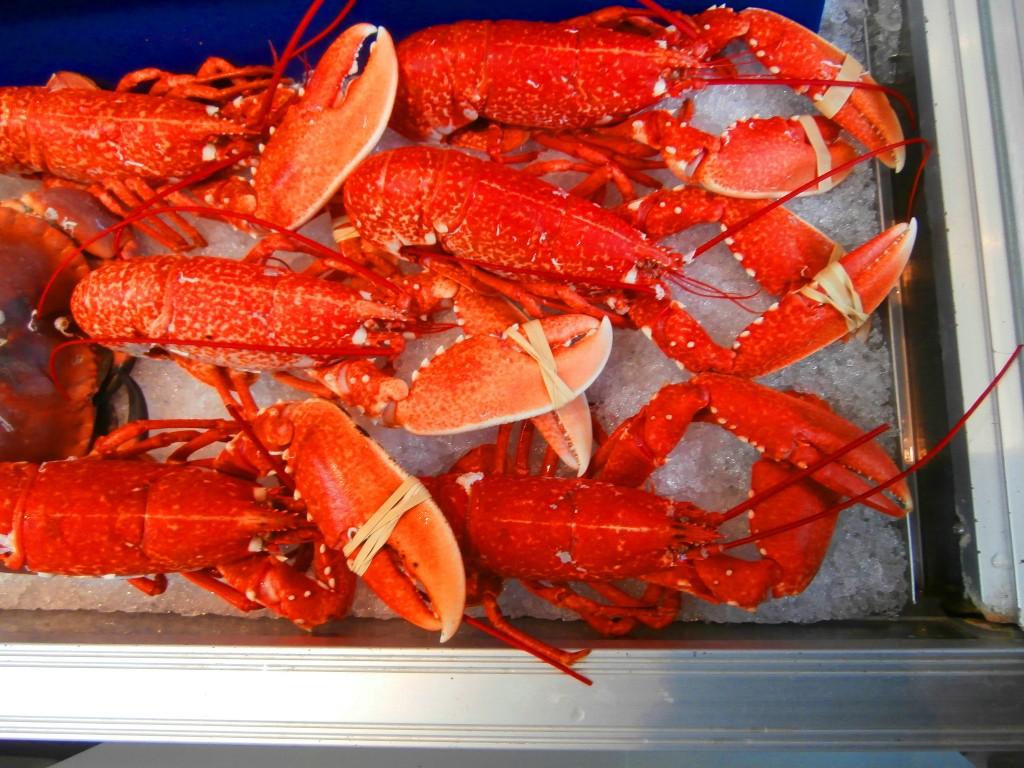 Steamed Lobsters |© Jennifer Copley/Flickr