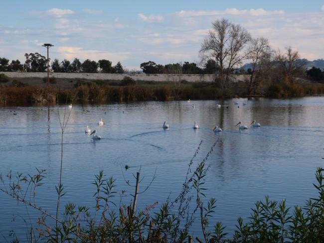 Sepulveda Basin Wildlife Area ©Los Angeles District