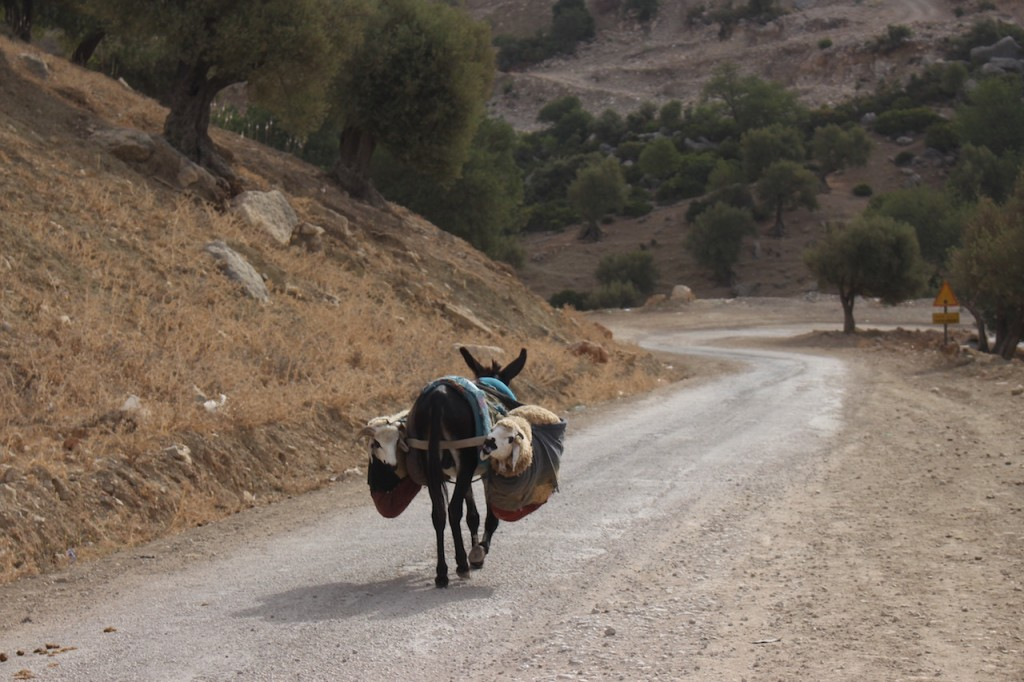 Returning home before the Eid celebrations | Copyright Mandy Sinclair