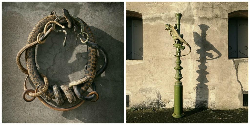 Darwin, Sinke & van Tongeren: Snakes | © Darwin, Sinke & van Tongeren / Darwin, Sinke & van Tongeren: Iguana | © Darwin, Sinke & van Tongeren