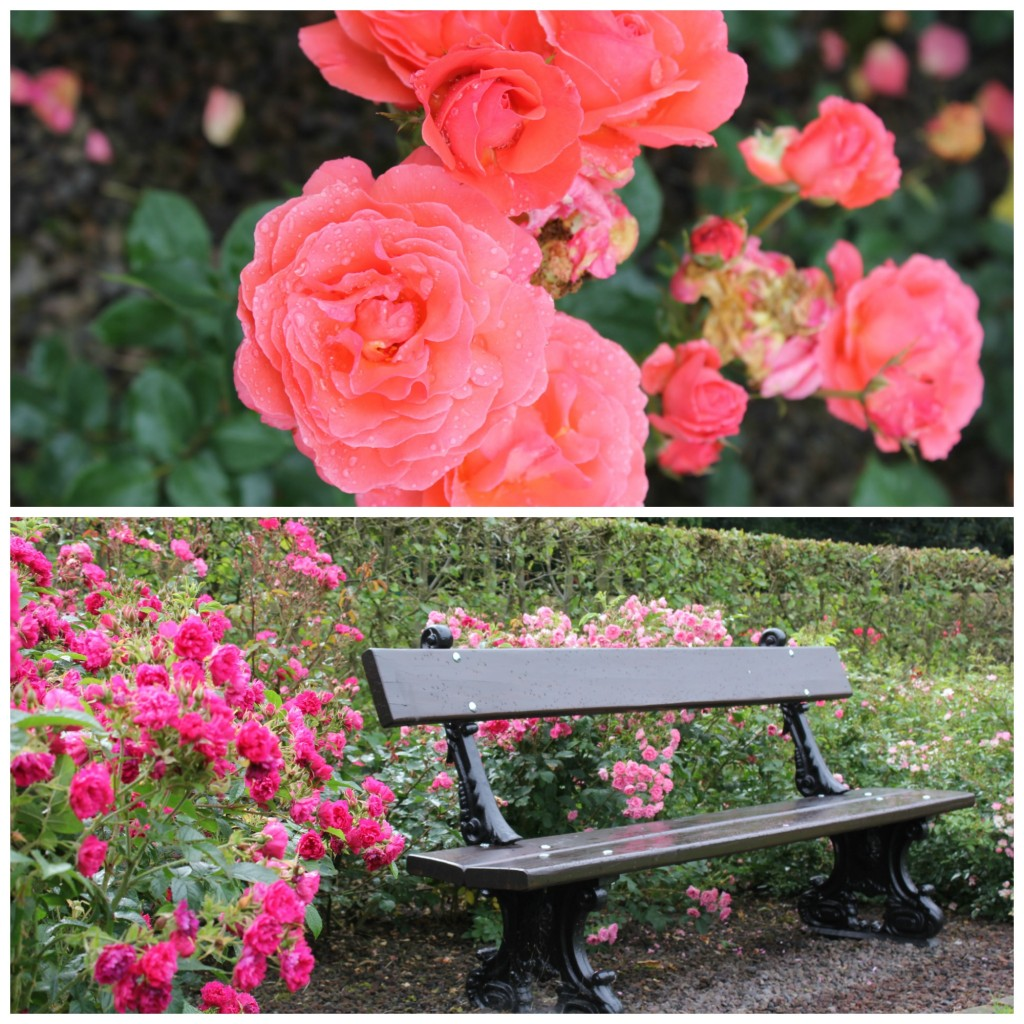 Enjoy the blooming roses on a secluded bench | Courtesy of Anne Boyle