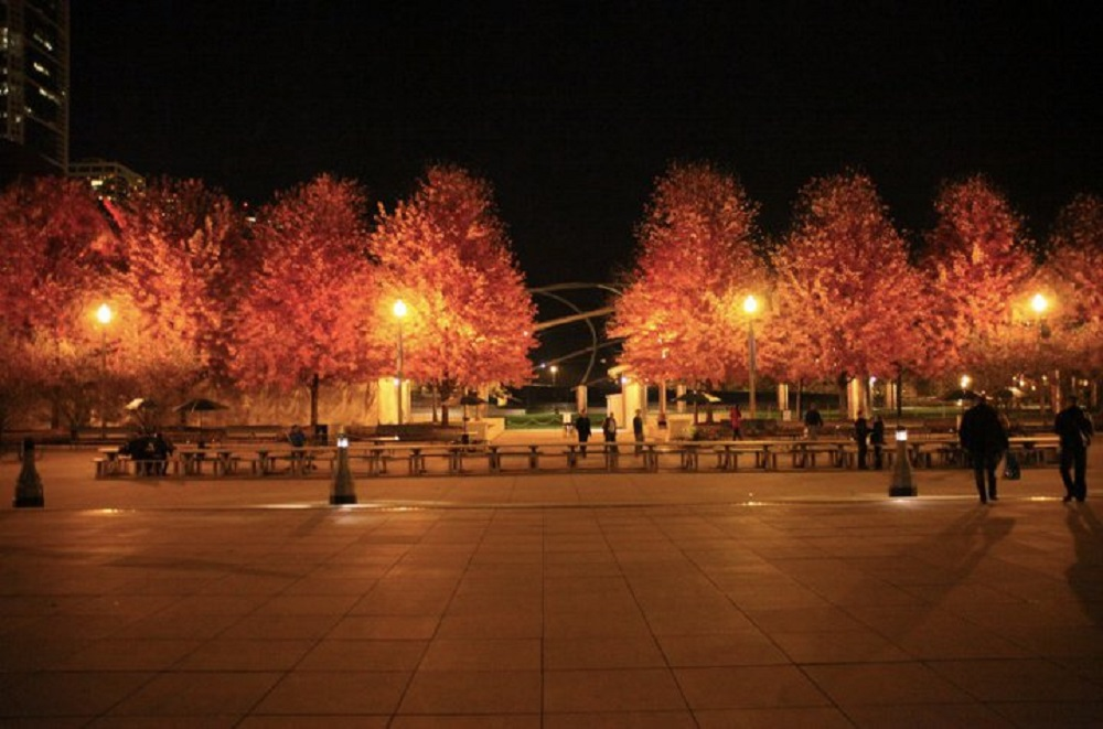 Red trees in Millennium Park, courtesy of Flickr: BuzzFarmers