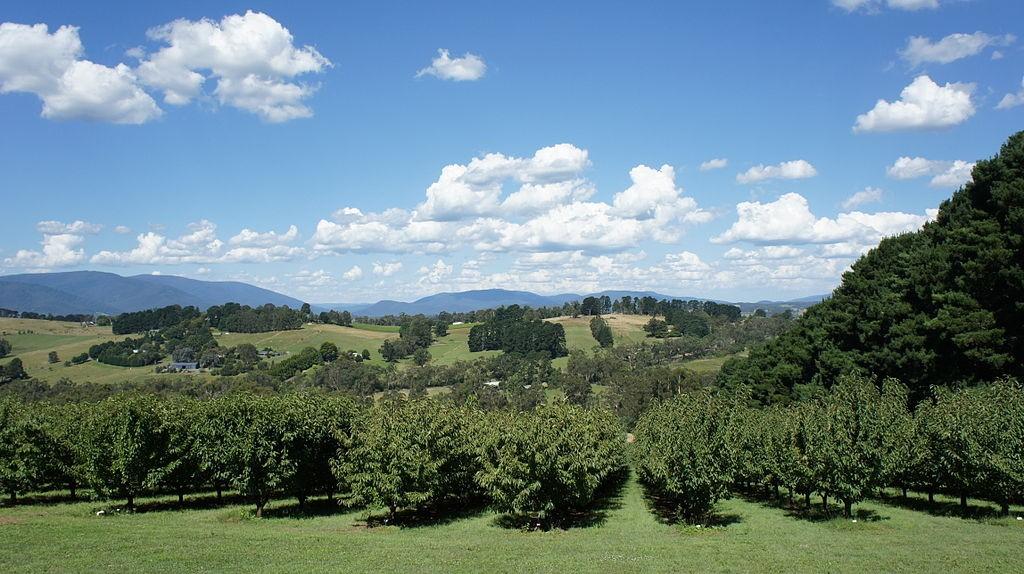 Yarra Valley (1) | ©Senning Luk/WikimediaCommons