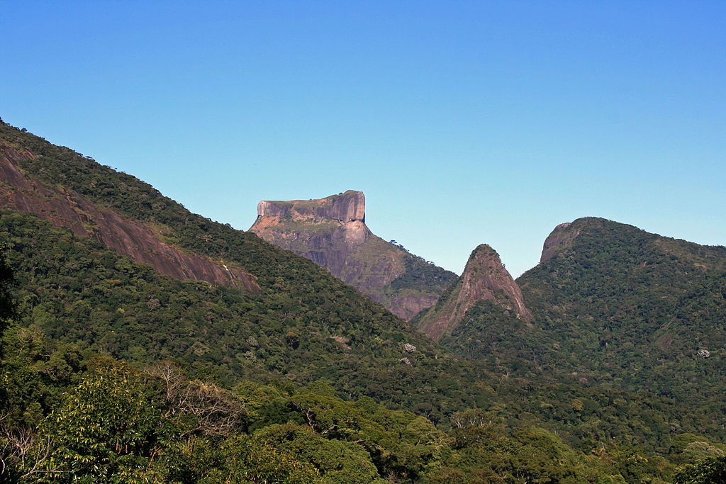 The Tijuca rainforest in Rio de Janerio |© Halley Pacheco de Oliveira/WikiCommons
