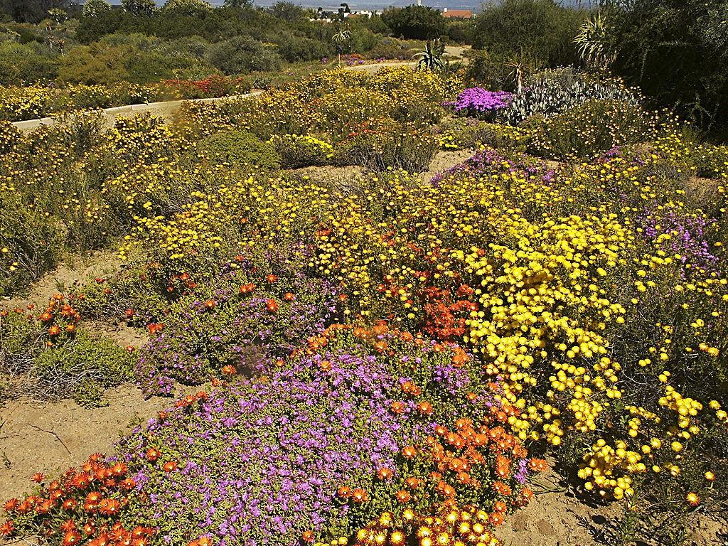 Karoo Desert National Botanical Garden, Worcester, South Africa © Winfried  Bruenken/WikiCommons