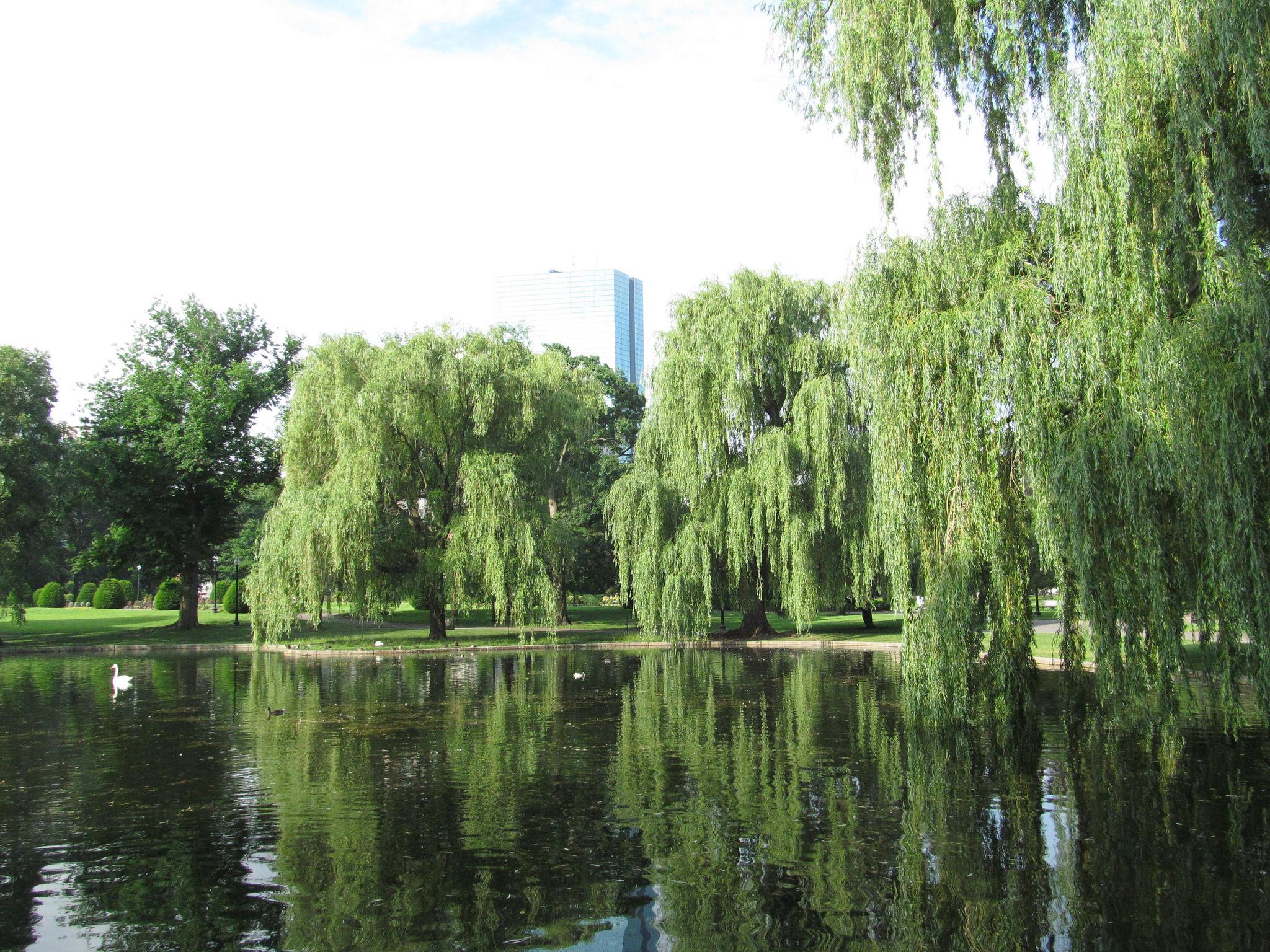 Boston Public Garden | © Doug Kerr/Flickr