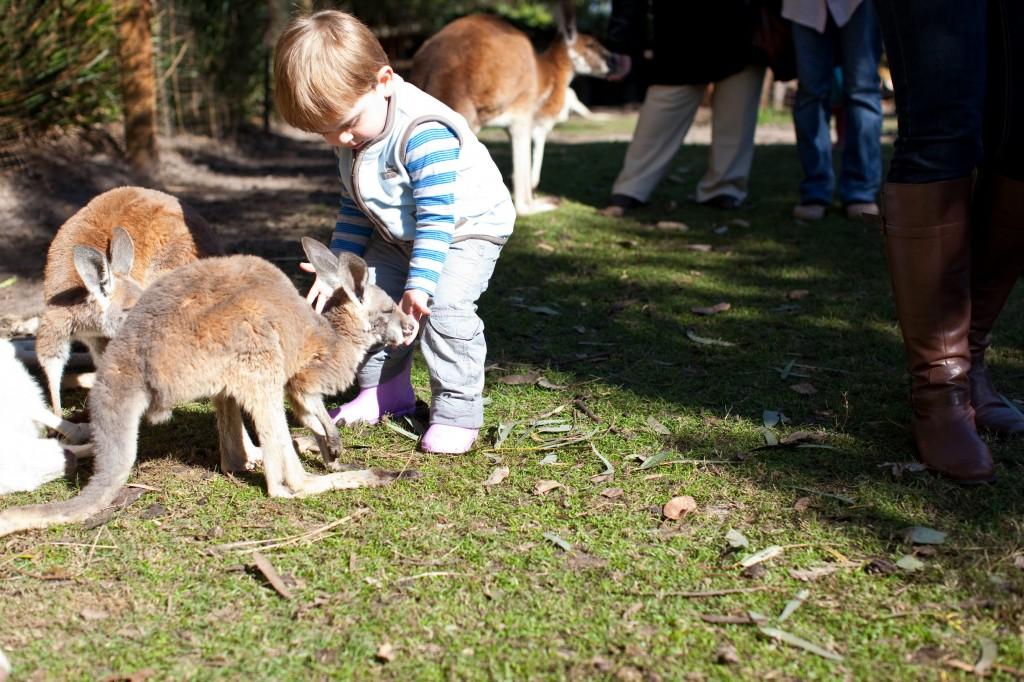 Kangaroos at Caversham Wildlife Park | Courtesy of Tourism Western Australia