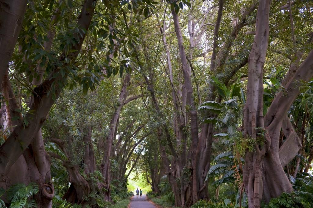 Tree Lined Path - Botanic Gardens | Courtesy of SATC