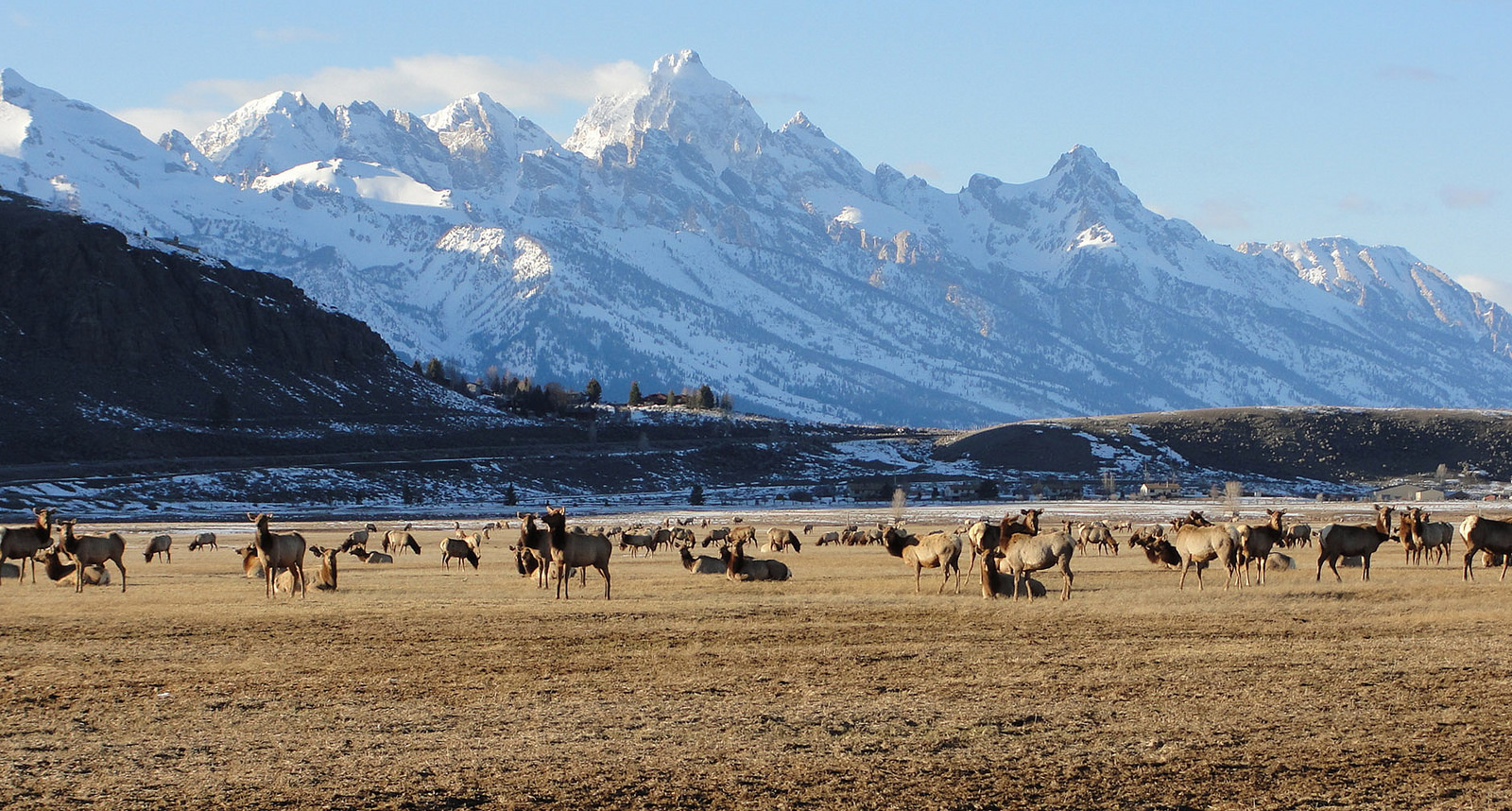 First day of Spring/The snow cover is receding at the National Elk Refuge in this photo taken on the first day of Spring, 2014 | © USFWS Mountain-Prairie/Flickr