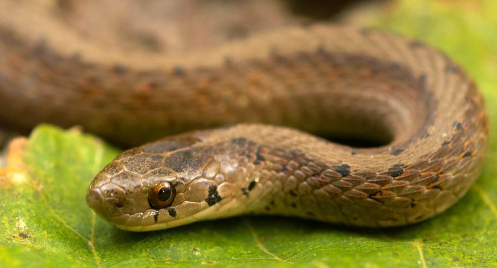 Brown snake | © John Robb/Flickr