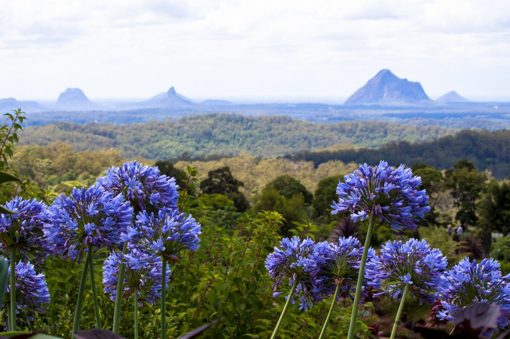 Glass House Mountains from Maleny Botanic Gardens | © Andy Hay / Flickr