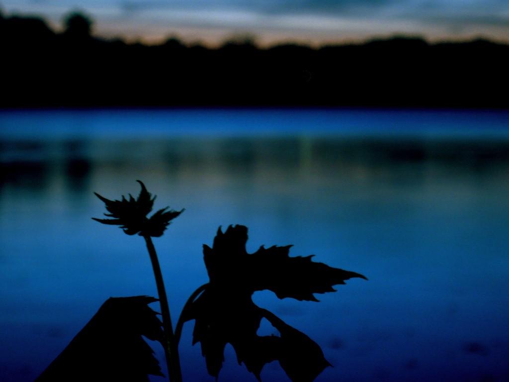 Jamaica Pond| ©Brendan Landis/Flickr