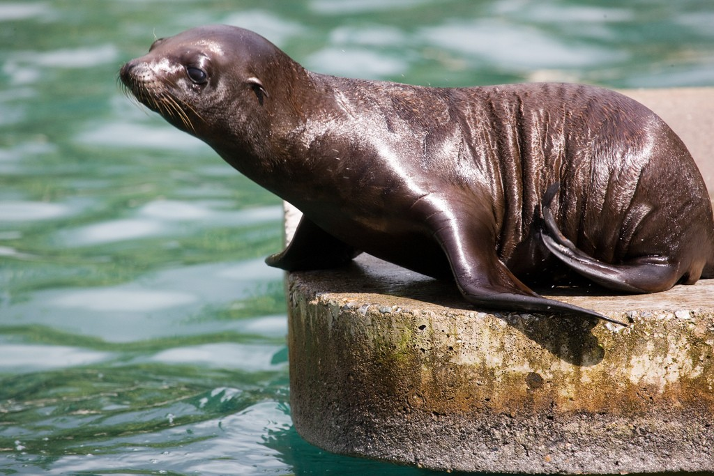 Dublin Zoo | © William Murphy/Flickr