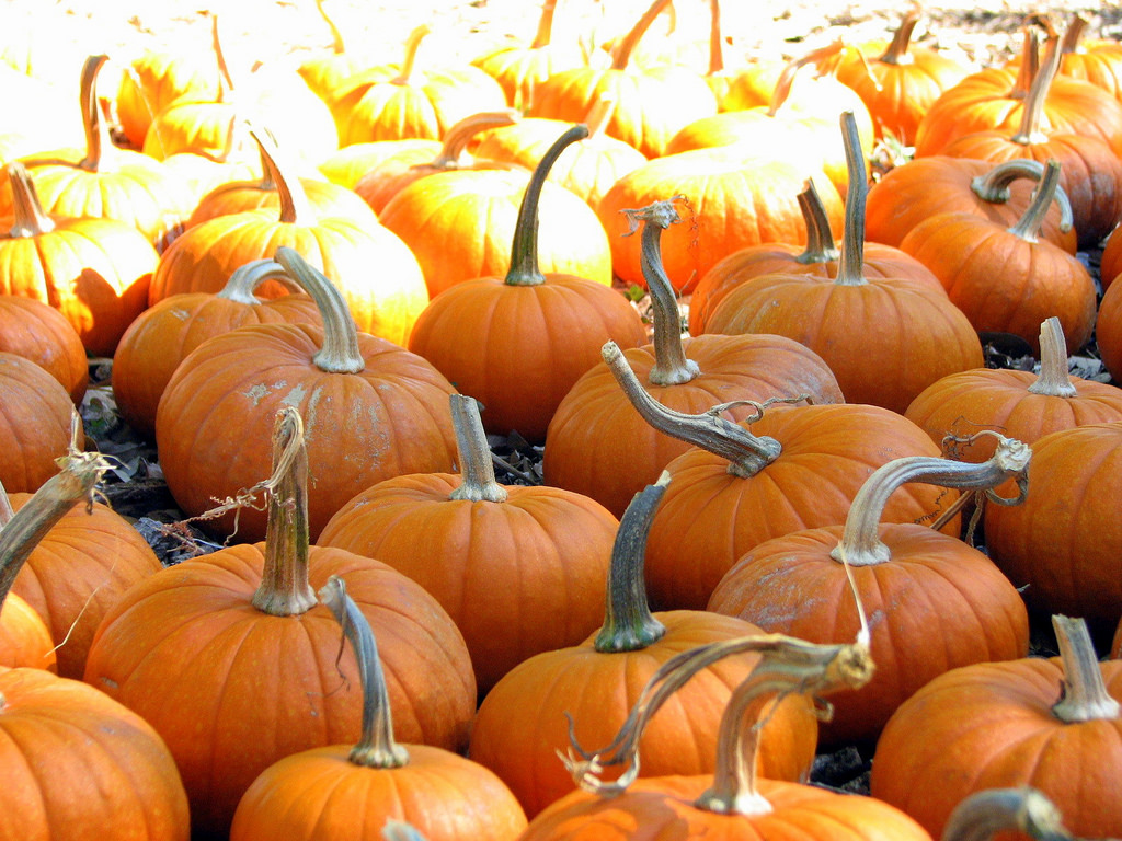 Pumpkin Patch © Jasleen Kaur/Flickr