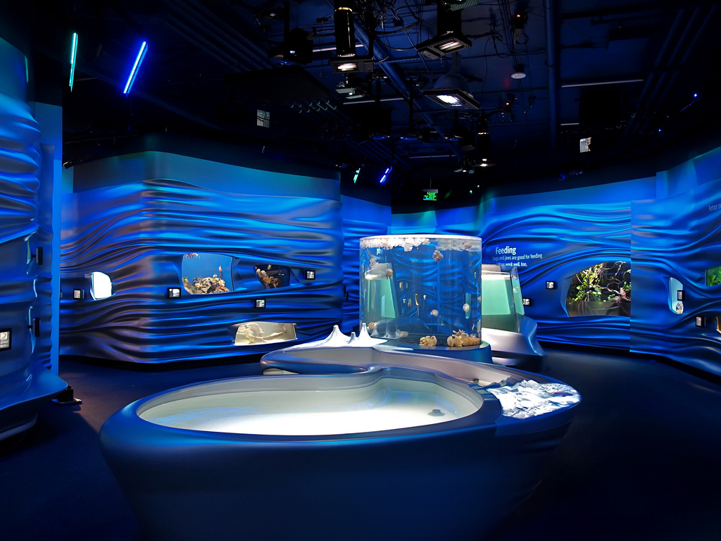 Water Exhibit at California Academy of Sciences | © Ingrid Taylar/Flickr