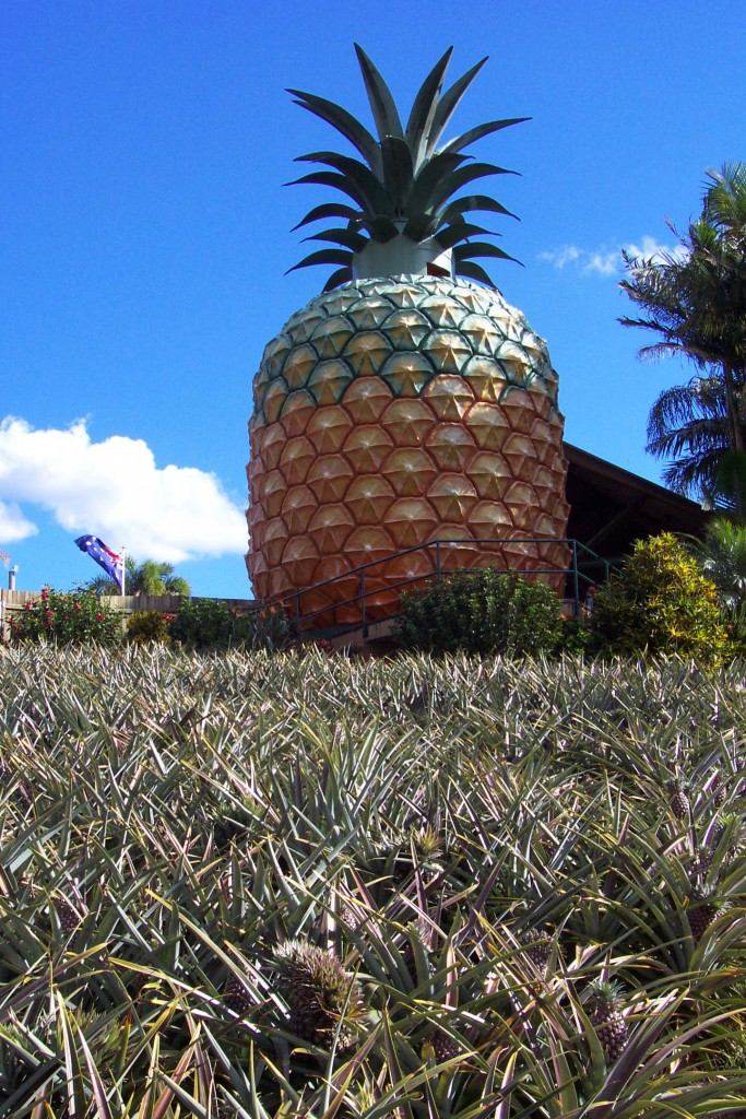 The Big Pineapple | © Stonestreet's Coaches - The Extra Mile / Flickr