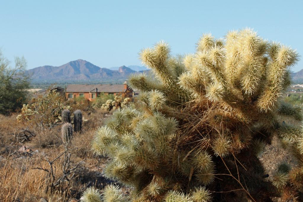 Camelback View | © Dru Bloomfield/Flickr