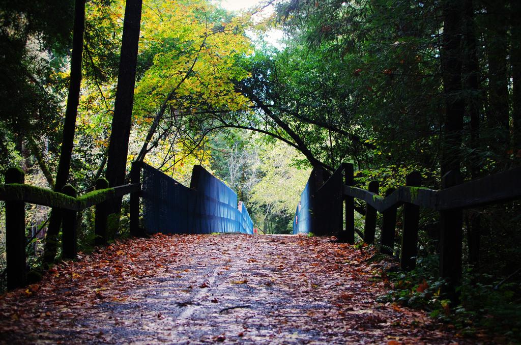 Samuel P. Taylor State Park © Lisa Williams/Flickr