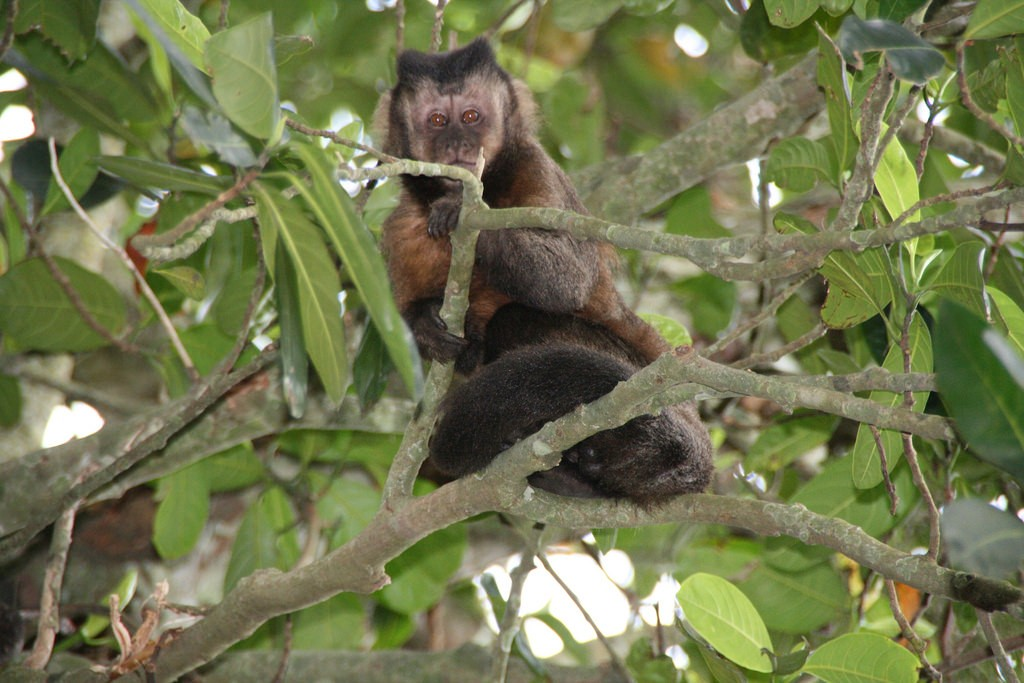 The wildlife in Tijuca forest |© Marco Zanferrari/Flickr