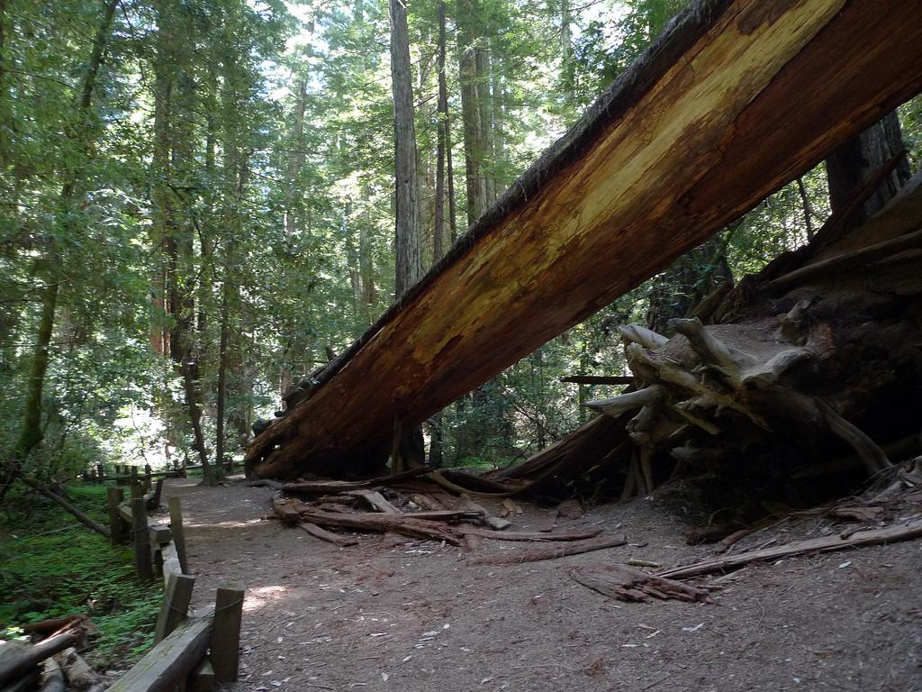 Pathway © Mark Hogan/Flickr