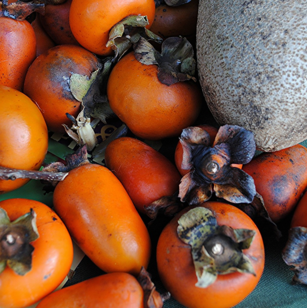 Persimons - a beautiful red orange fruit - are a wonderful treat | Susan Ford Collins/Flickr