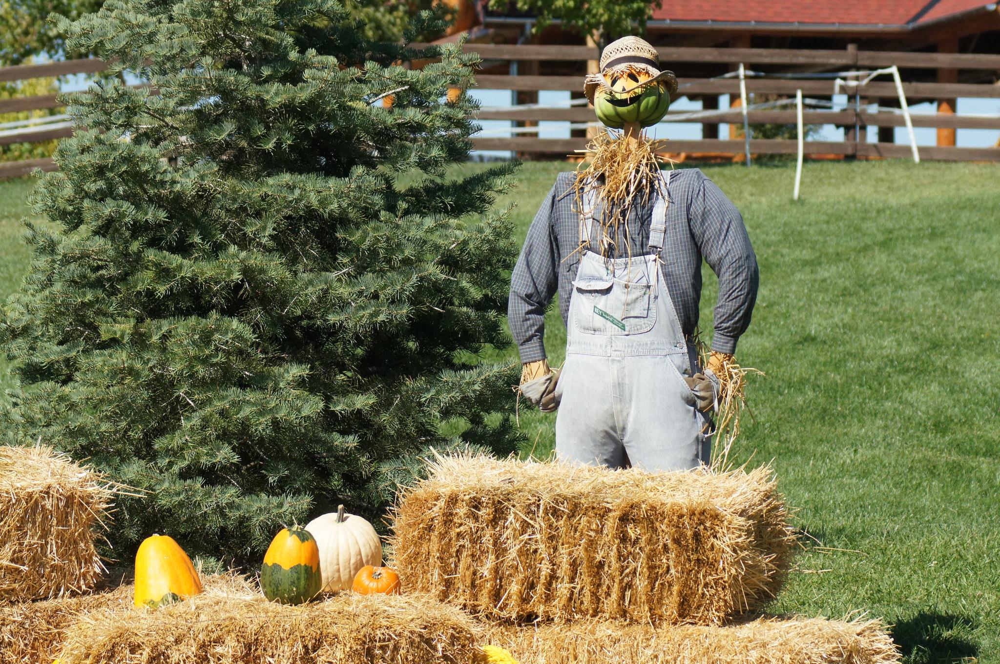 Scarecrow © David Williss/Flickr