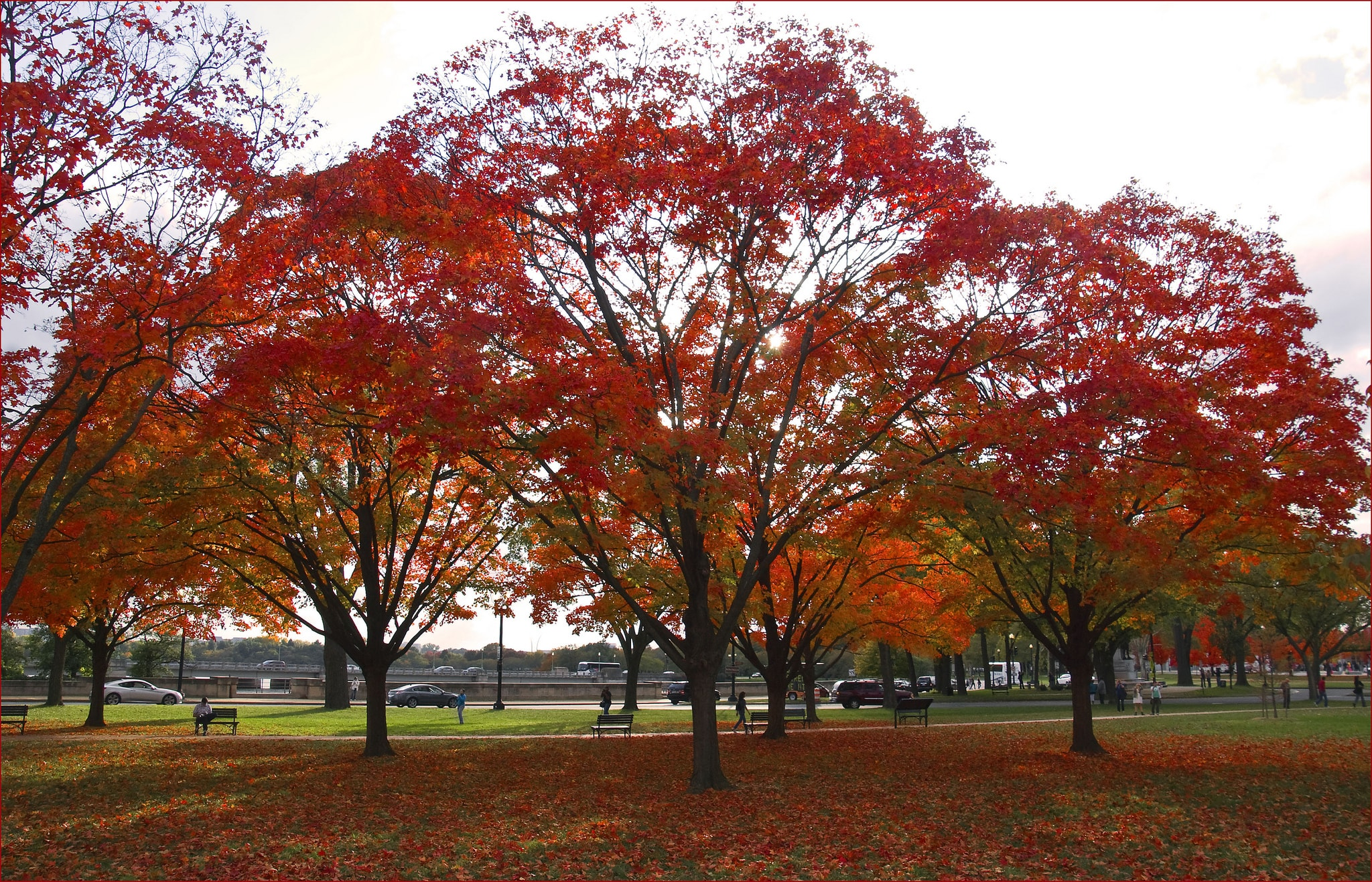 6 Beautiful Dc Parks To Watch The Leaves Turn This Fall