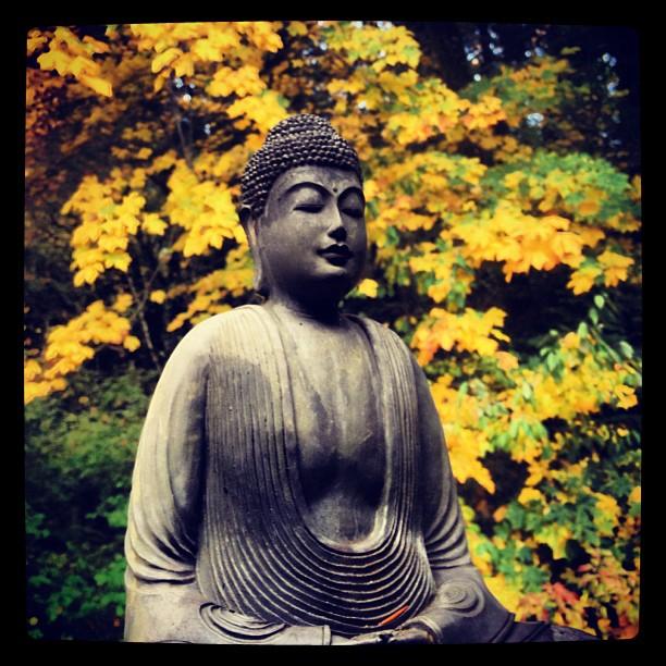 Meditation│© eddiecoyote