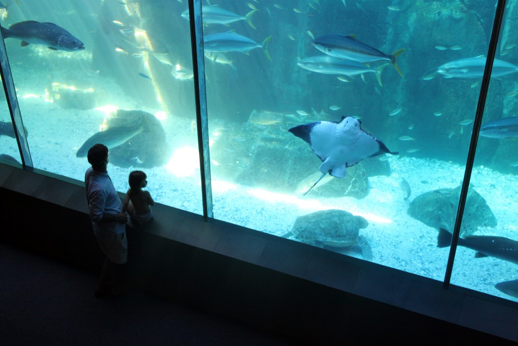 Two Oceans Aquarium © Flowcomm/Flickr