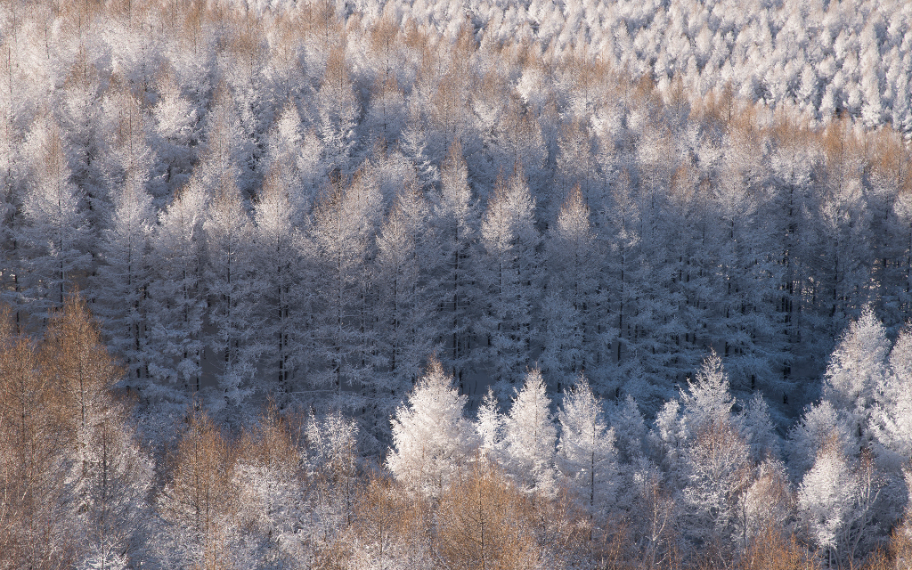 Forest, Inner Mongolia | © Anthony Lau