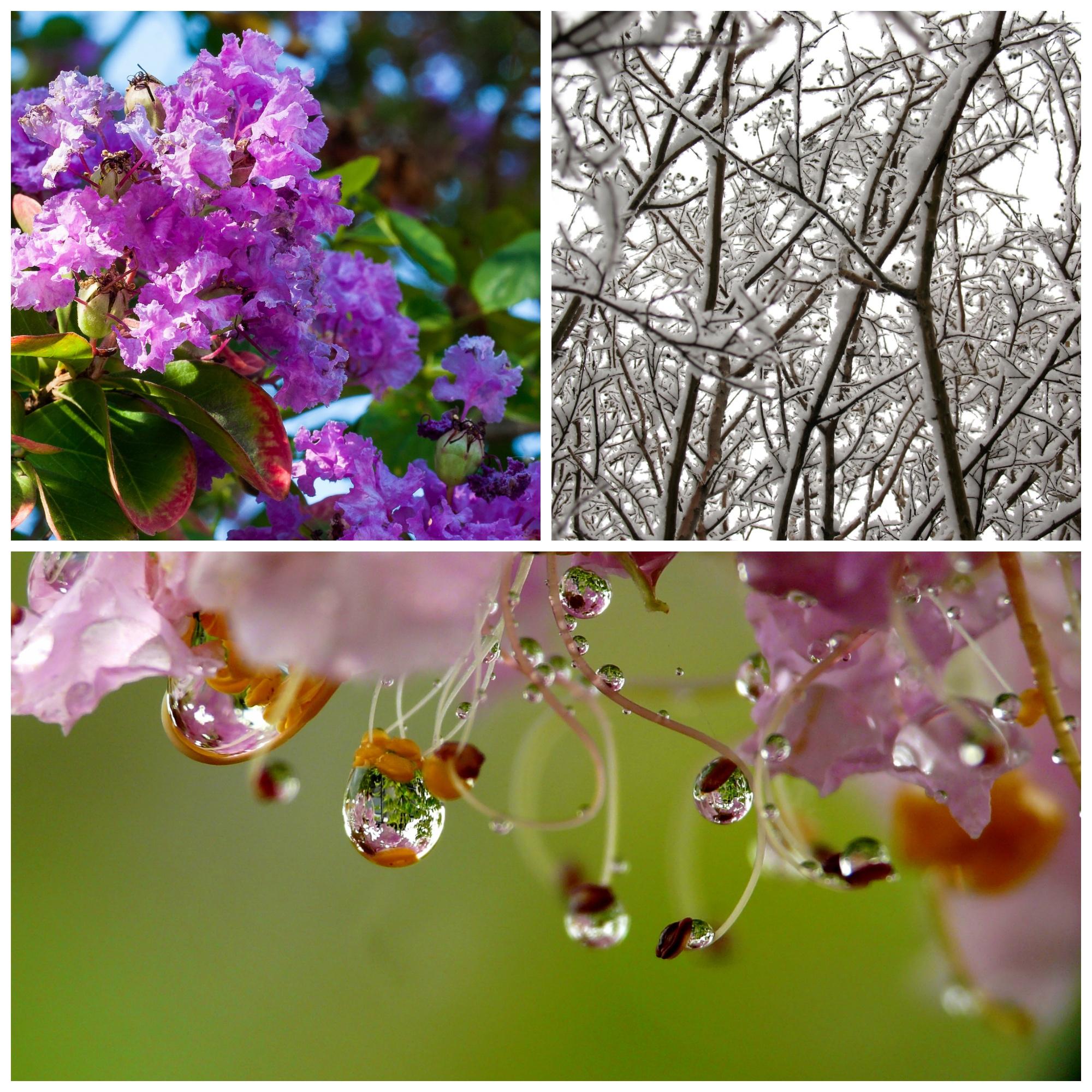 Top Left © Shelia Sund, Top Right © psionicman, Bottom photo © ConiferConifer, Creative Commons
