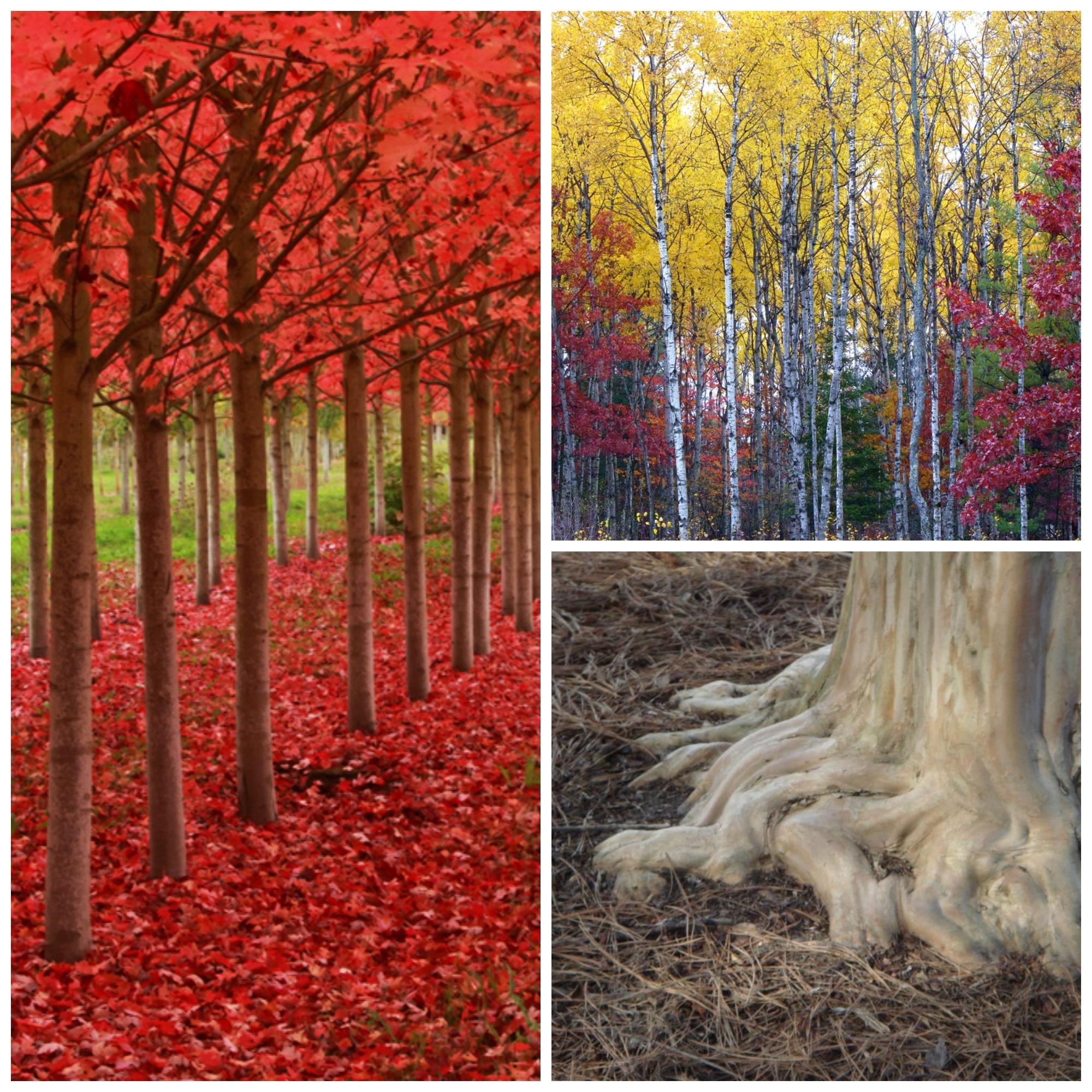 Left © 511Ian Sane, Top right © Rachel Kramer, Bottom Right © David Houston