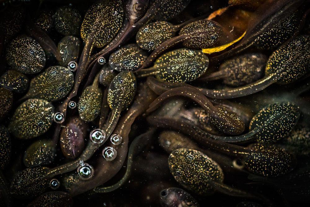 Tadpoles | © Jeanette Sakel BPWA Award