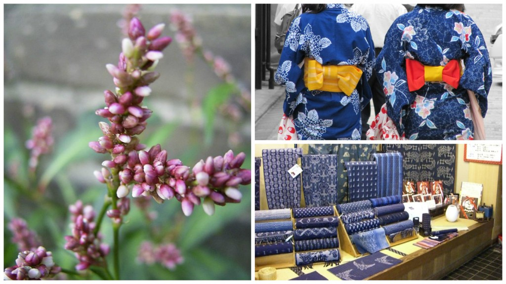 A type of polygonum, where indigo dye can be extracted   © TeunSpanns/WikiCommons / Women in indigo yukata out for a stroll   © Lorean a.k.a. Loretahur/Flickr / Ai-zome dyed kasuri (patterned) fabrics for sale   © Jyo81/WikiCommons